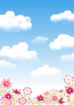 하늘과 코스모스 배경