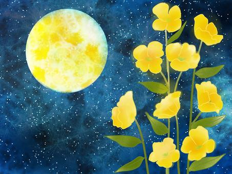 To be evening grass, evening primrose