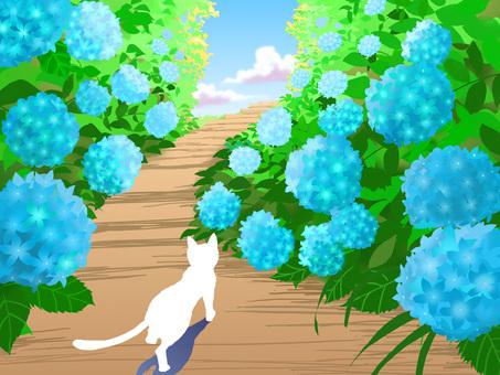 White cat going through the hydrangea path