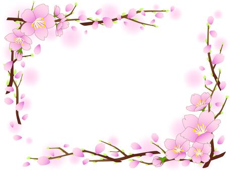 벚꽃의 프레임 2015