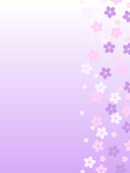 Cherry blossom background background _ vertical (thin purple)