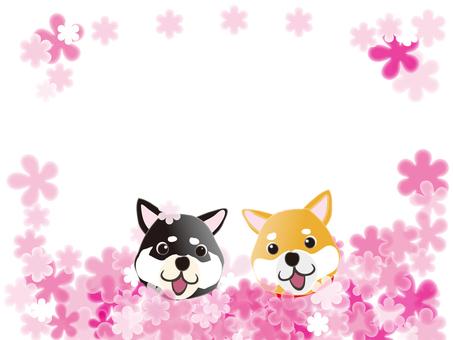 司馬犬和花田