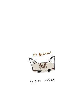 Cat's forehead