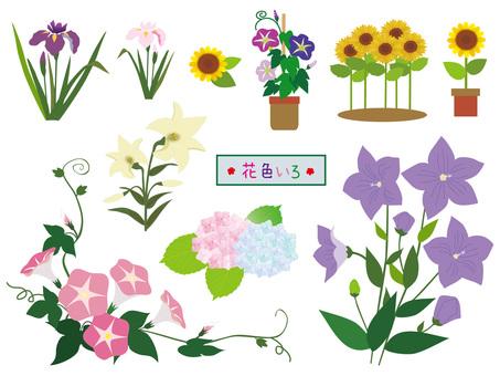 Summer flower color