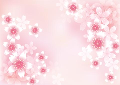 벚꽃의 꽃 21