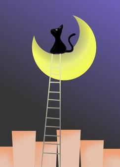 Moonlit night, ladder and cat