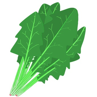Spinach (vegetables)