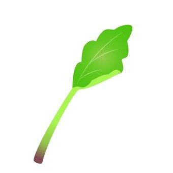 Baby leaf herbs