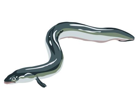 Animal _ seafood _ eel _ no line