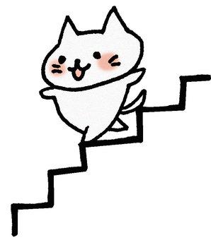 Stairs cat