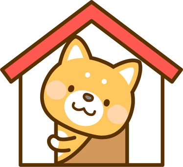 Shiba Inu peeping from the doghouse