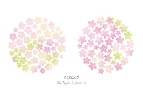 벚꽃 [그라데이션]