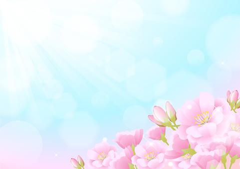 Sakura Material 5