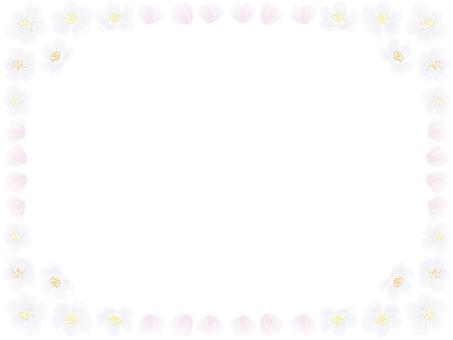 Yoshino cherry frame