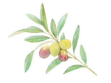 Olive ★ 0304-F
