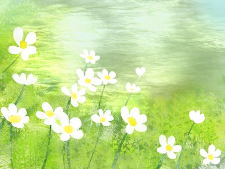 Mei flower algae (baikamo)