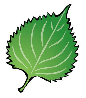 Macrophyll