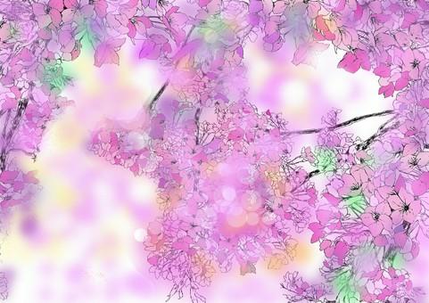 벚꽃의 계절