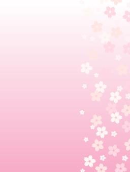 Cherry blossom background background _ vertical (pink