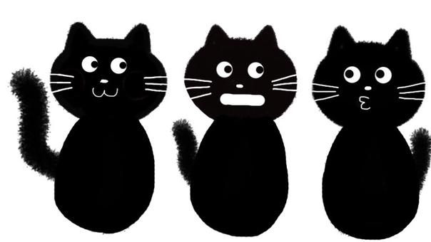 Black cat three brothers