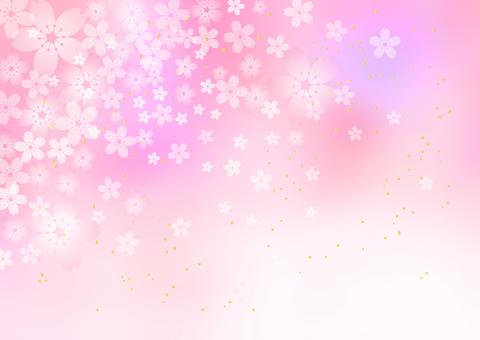 Sakura _ pale pink _ background 1864