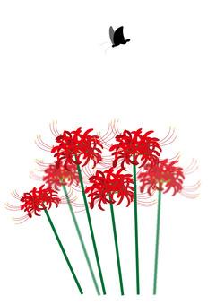 피안 꽃과 검은 호랑