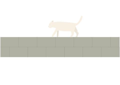 담 위를 걷는 고양이