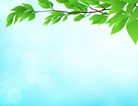 Tree branch _ leaf sky