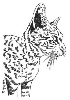 Mari's cat