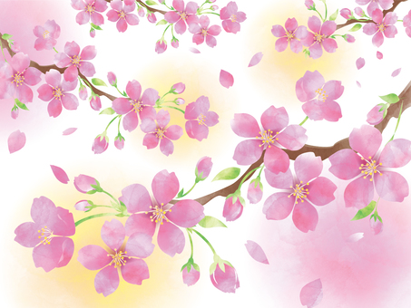 Watercolor-style cherry blossoms 2