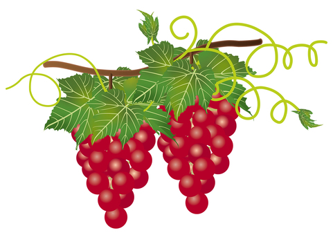 Red grapes 3