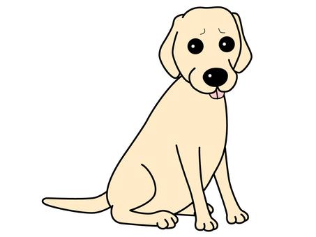 Labrador retriever ~ world dog