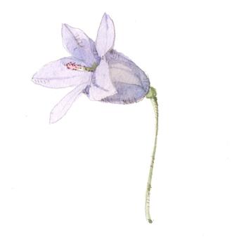 작은 꽃 11- 벨 플라워