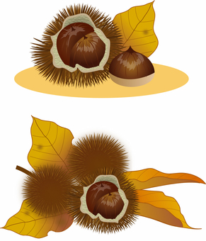Illustration of chestnut, real touch