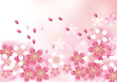 벚꽃의 꽃 60