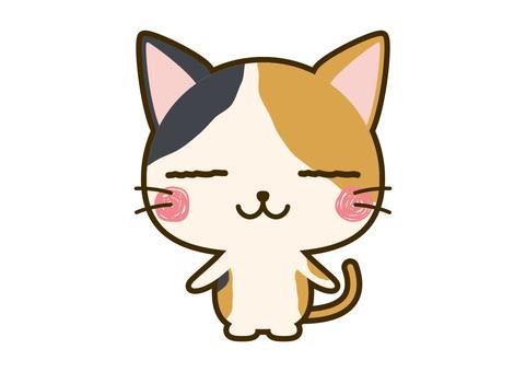 Animals. Cat 12