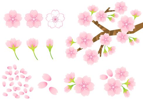 벚꽃 소재 10
