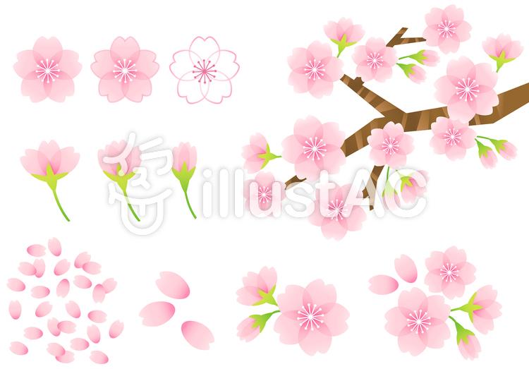 桜素材10のイラスト