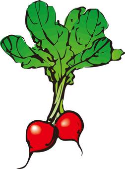 Red radish with red head