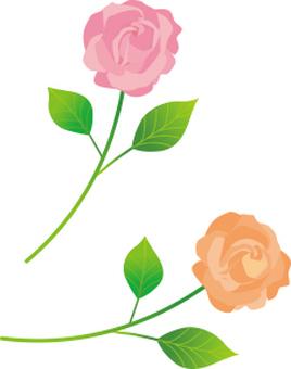Roses 2 flowers