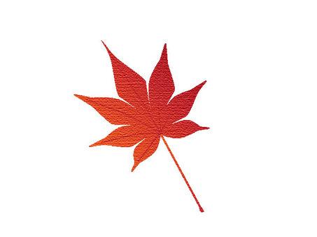 Leaves of autumn leaves maple