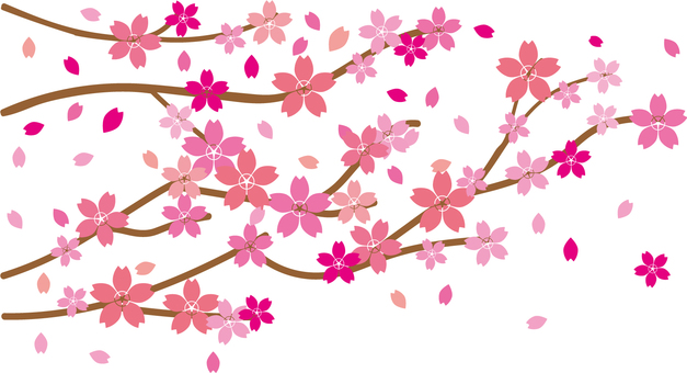 h28 cherry blossoms material 04