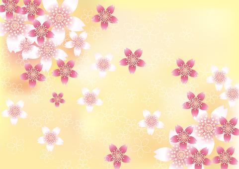벚꽃의 꽃 85