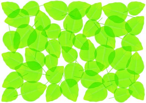 新鮮的綠色 -  Konoha