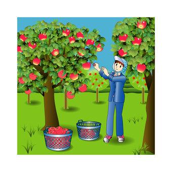 사과 농장