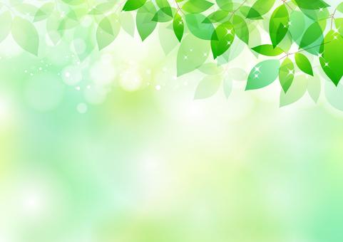Fresh green material 179