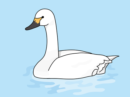 Swan (Swan) 2