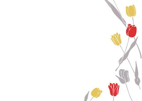 Tulip B