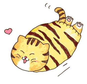Stomach cat