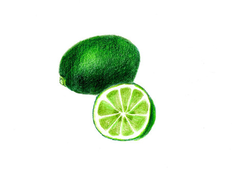 Lime (color pencil drawing)